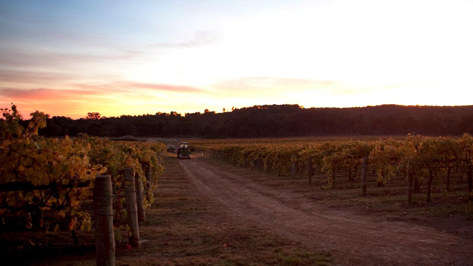 Heathcote Winery