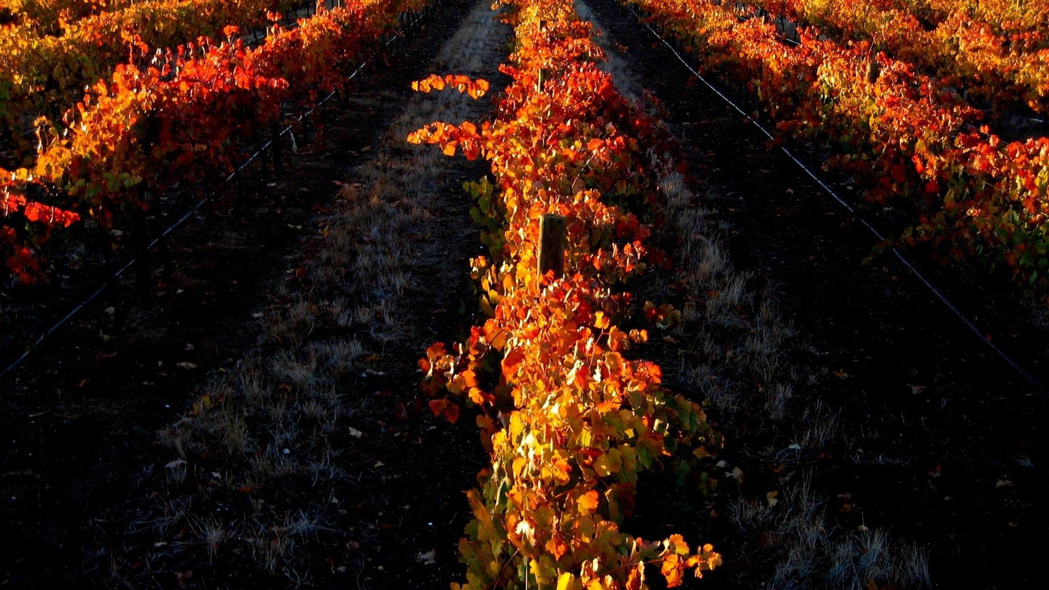 Sandhurst Ridge in autumn
