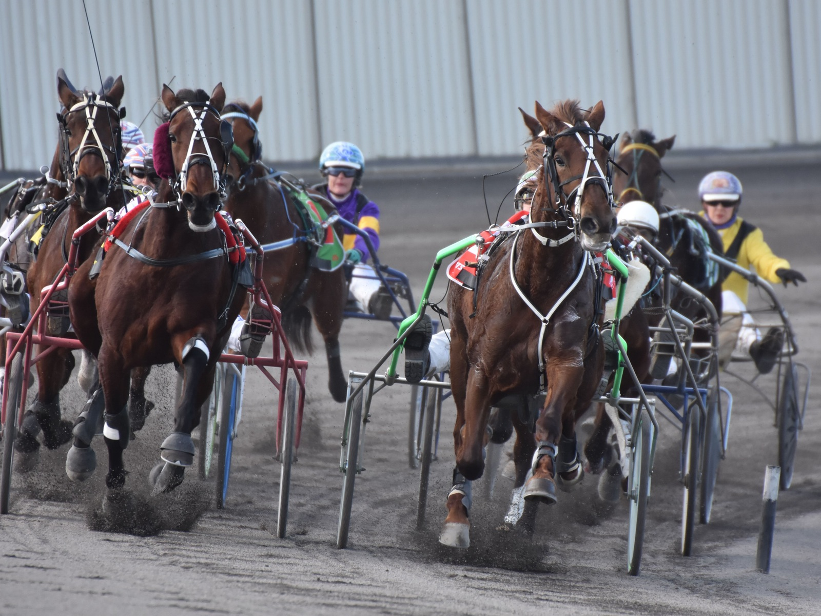 Maryborough Harness Racing Club