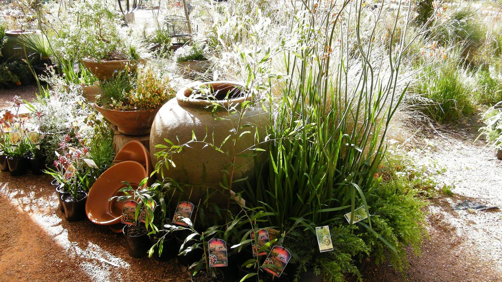 Display of native plants