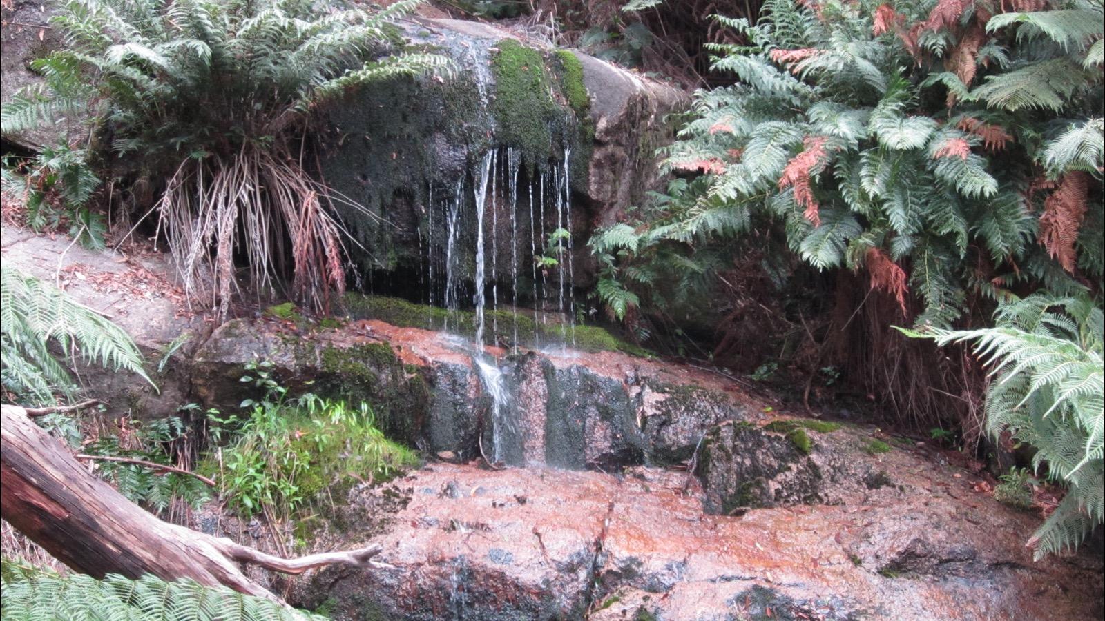 Ferns waterfall, Mount Buangor State Park - GRAMPIANS