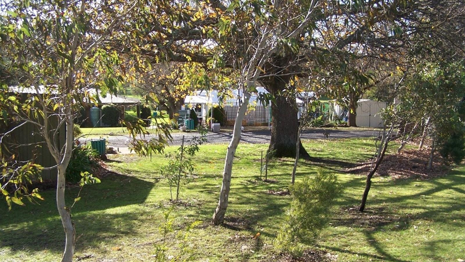 Pleasant shady trees