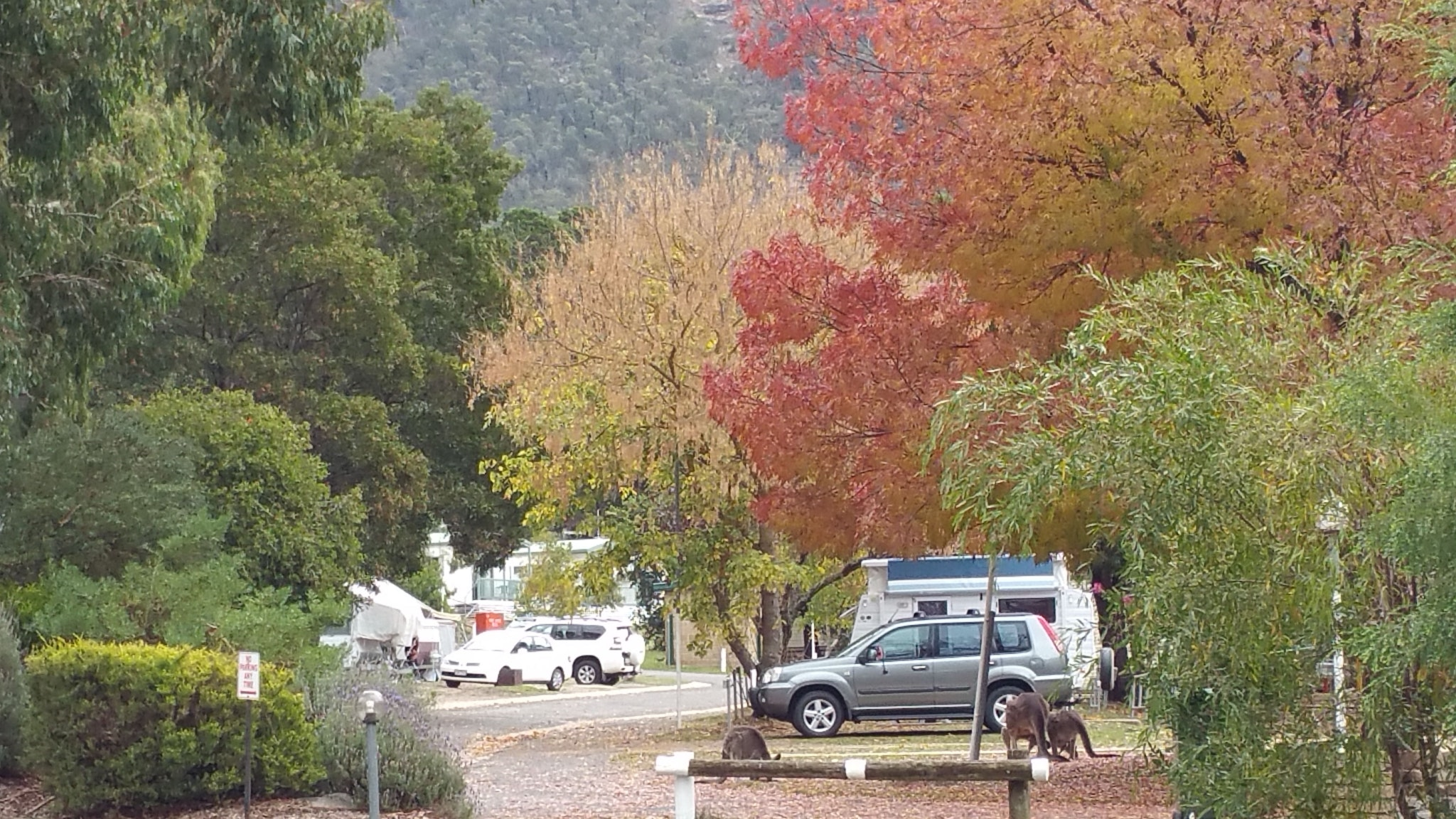 Dog Friendly Caravan Parks Bellarine Peninsula