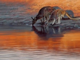 'Dusk- red and western grey kangaroos'