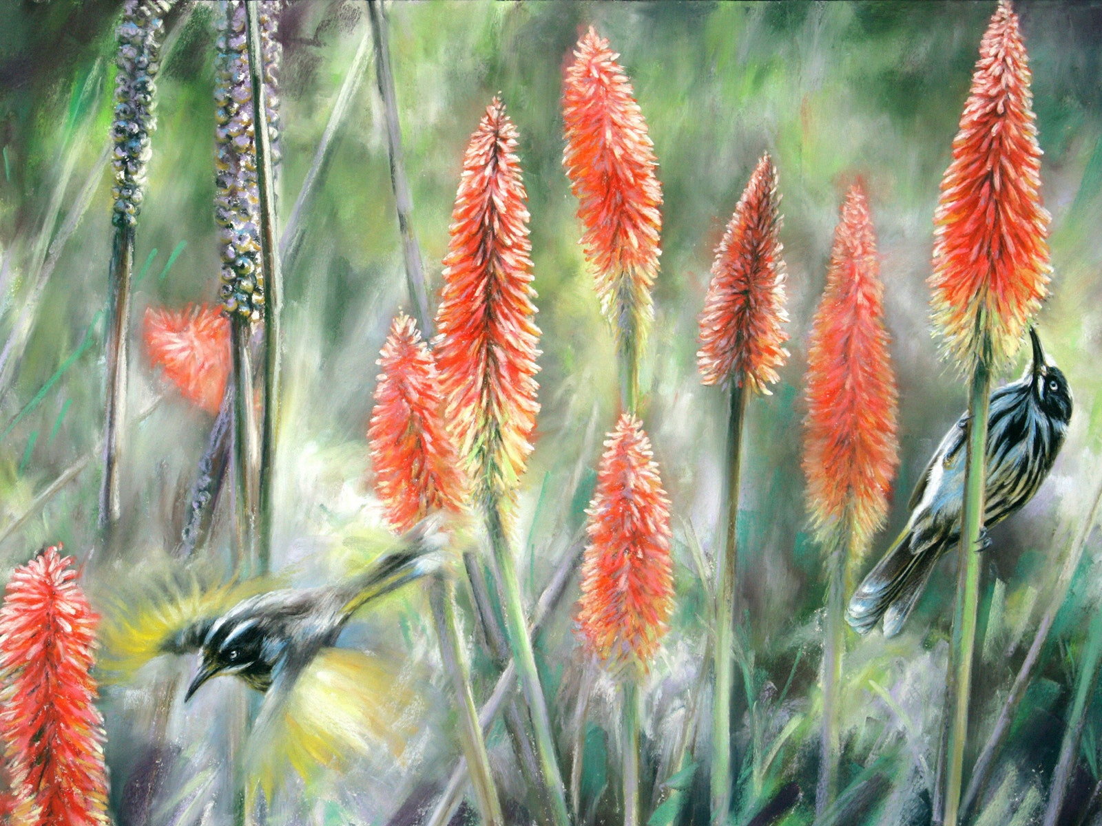'Red hot feeding-new holland honeyeaters'
