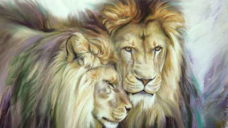 'Lion brothers-African lions'