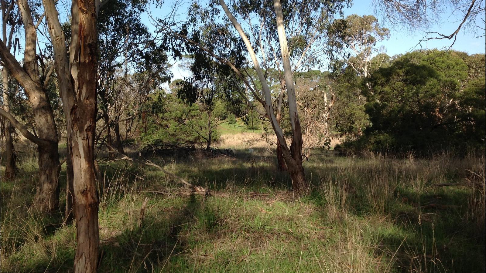 HIRLs beautiful native bushland walk