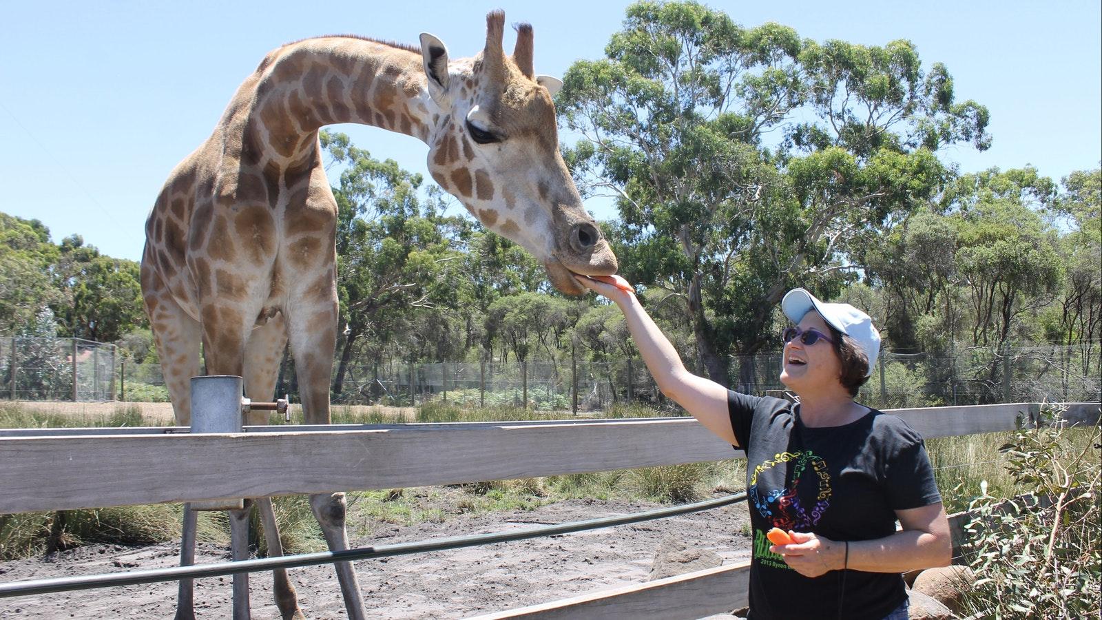 Meet the Giraffe at Halls Gap Zoo