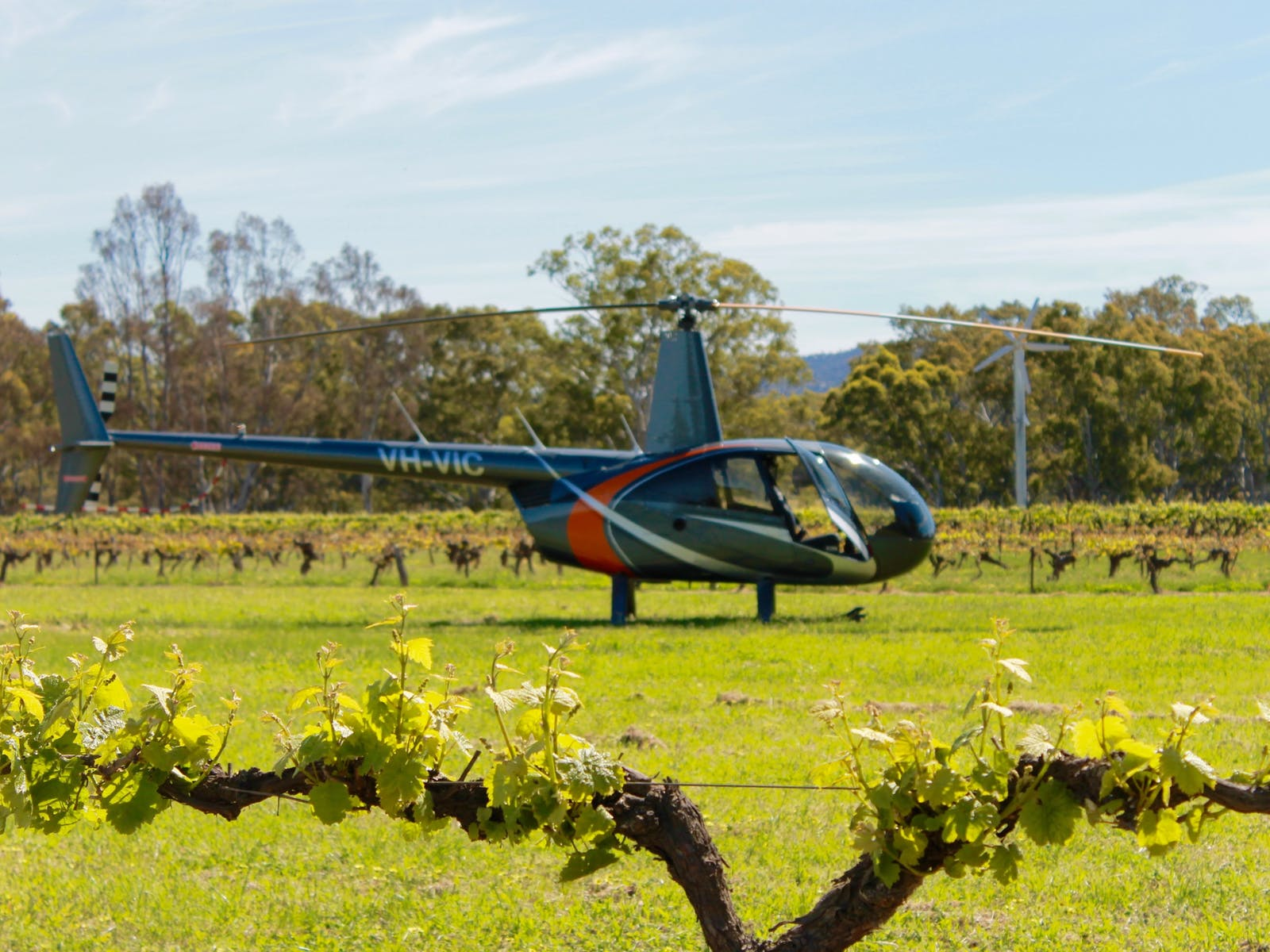 Landing between the vines