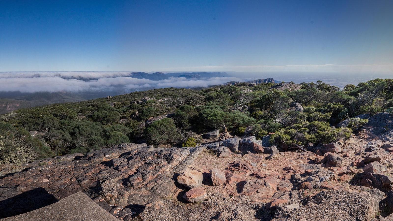Mt. William views