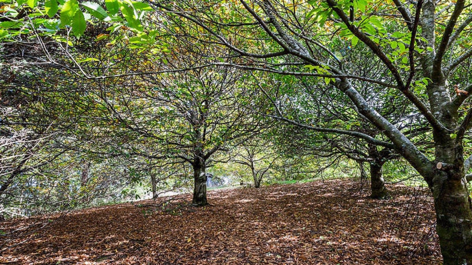 Chestnut Grove