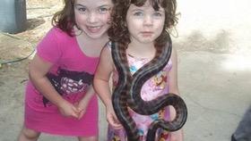 Hold a python