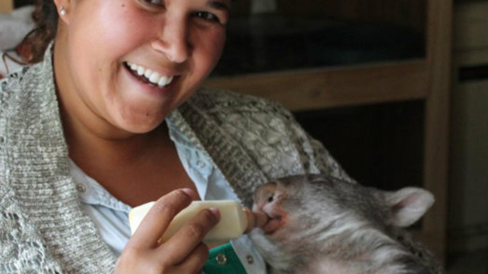 Bottle feed baby Wilma wombat