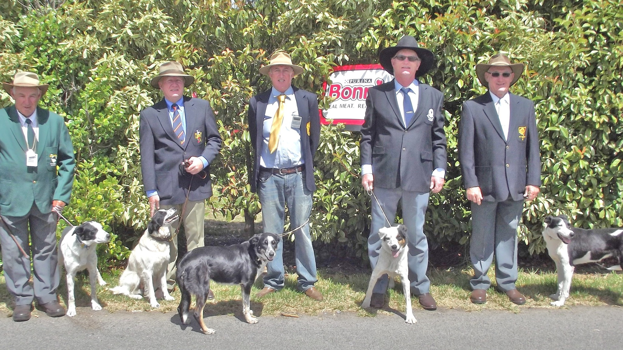 Some of the state reps for the Aust  Dog of the Year