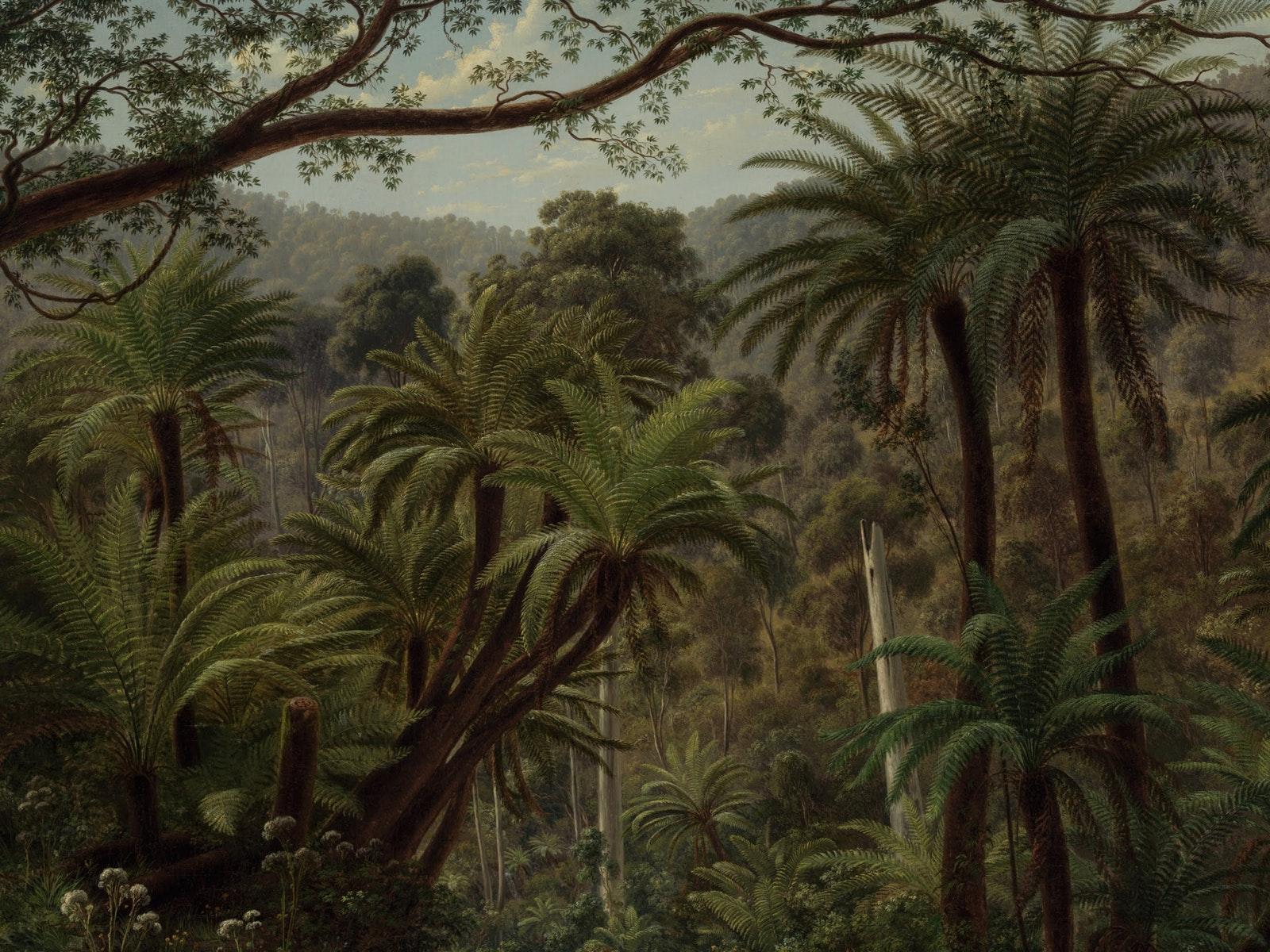 Painting of Australian rain forest by Eugene von Guerard.