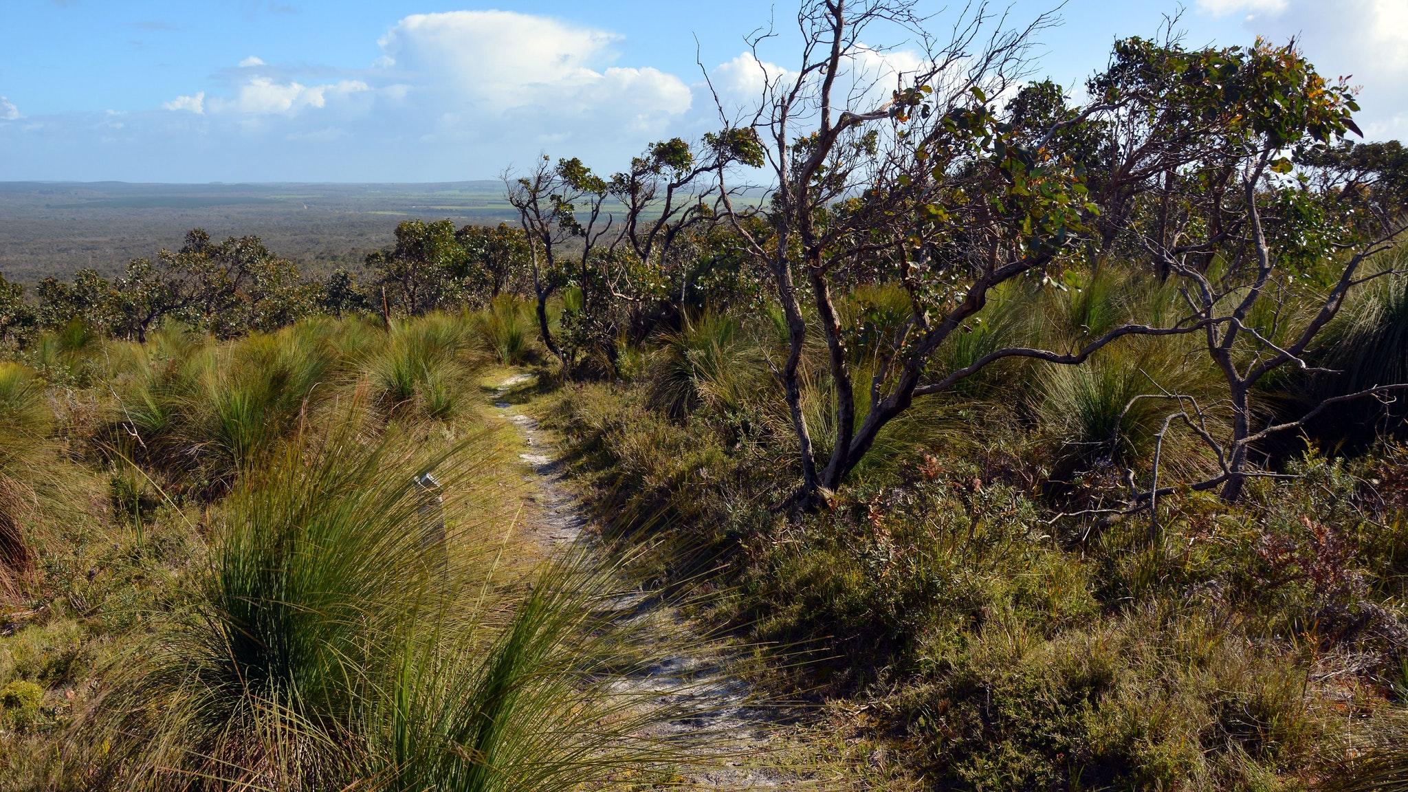 Mount Richmond Nationa Park - Benwerrin Walk