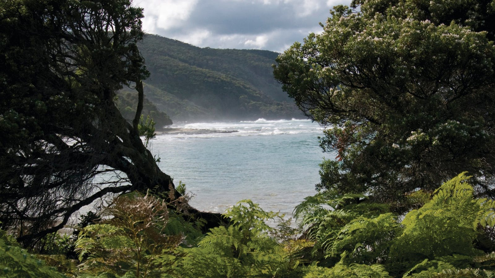 Great Otway National Park edit