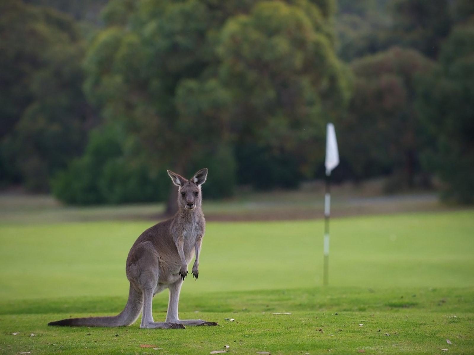 Anglesea Golf Club
