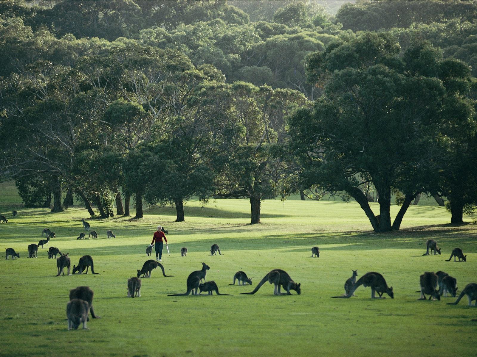kangaroo island road map