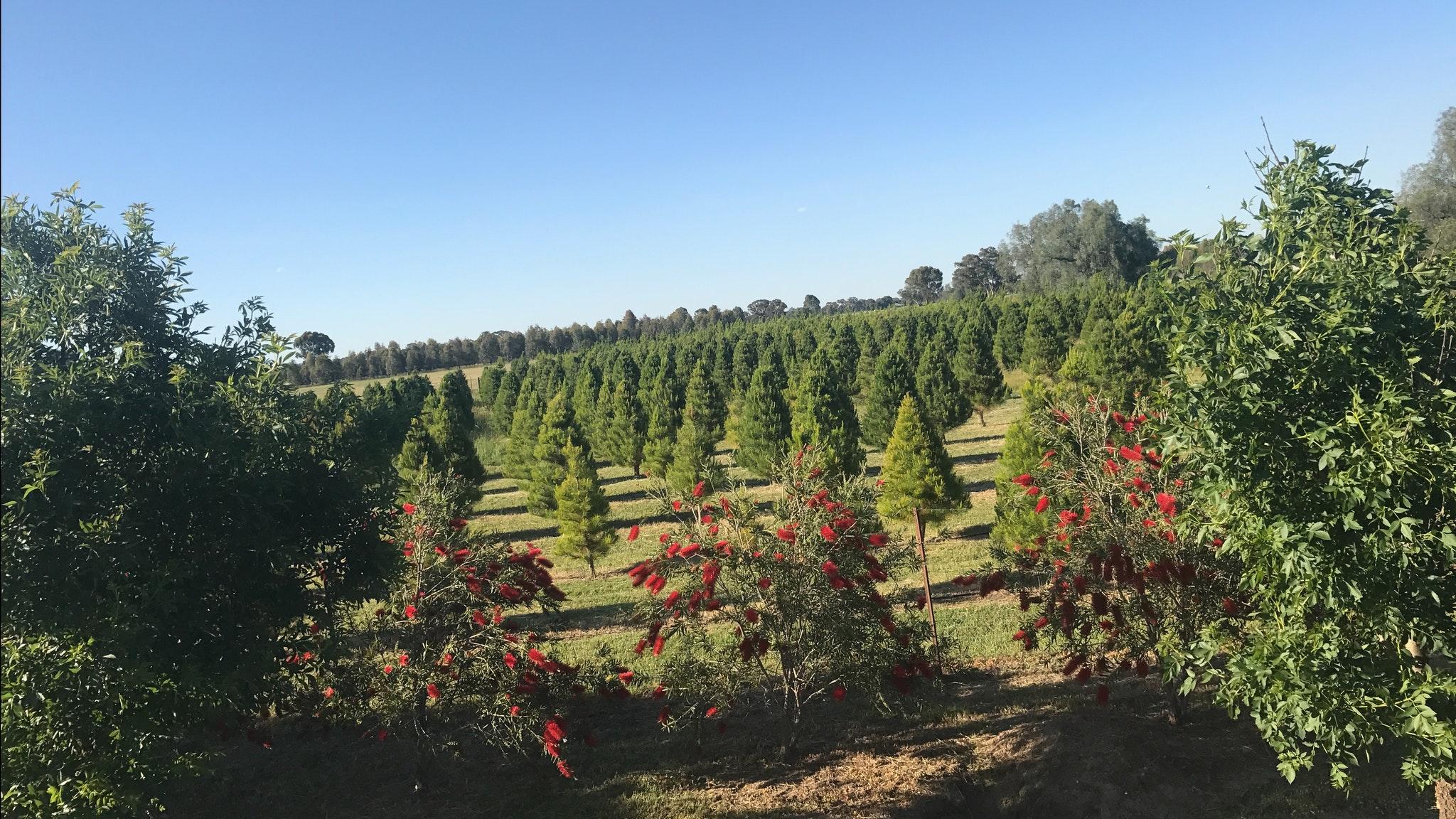 Rutherglen Christmas Trees Farm Stay