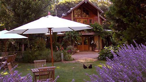 Lavender in bloom at Lavender Hue