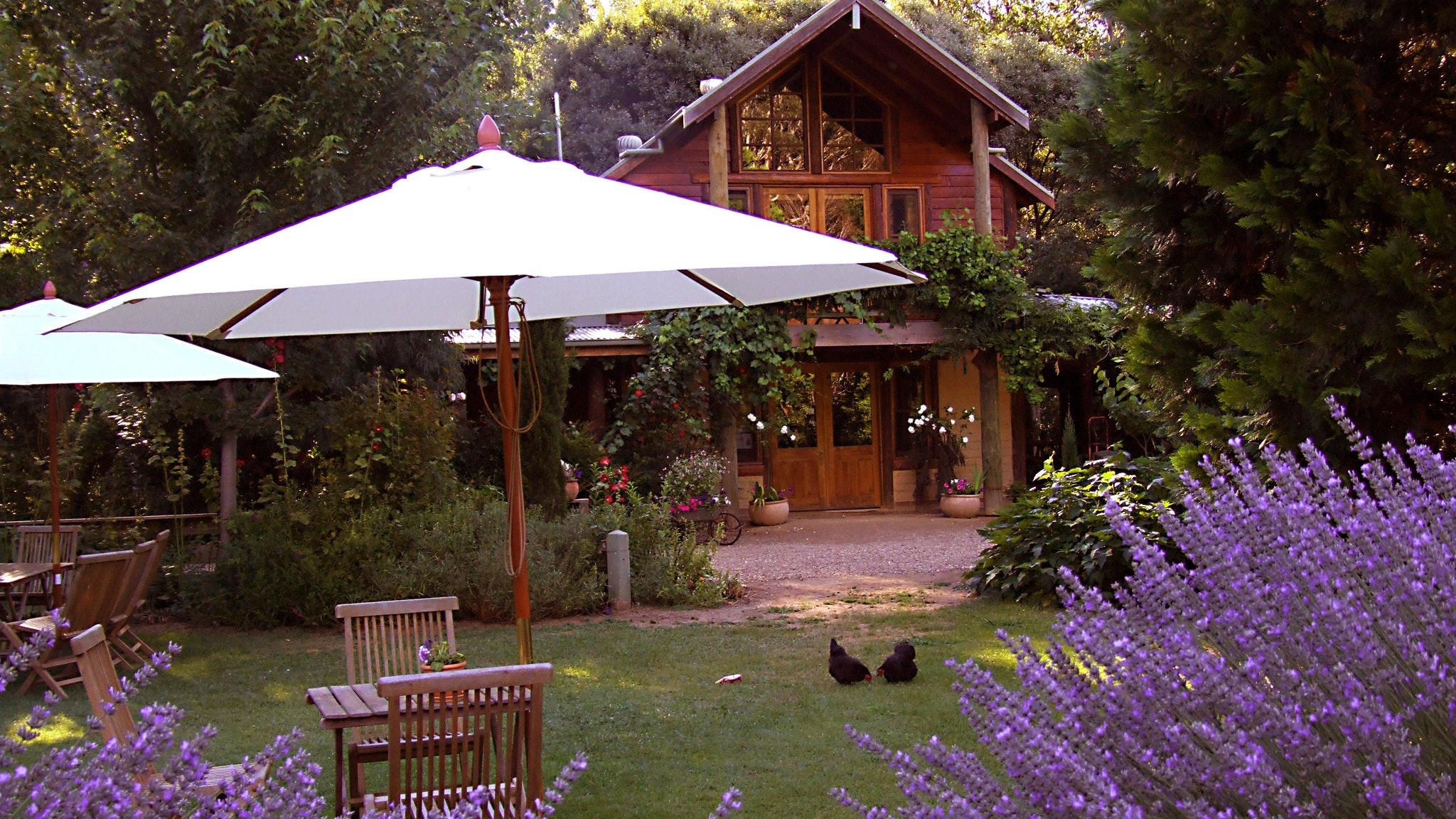 Lavender in bloom in summer at Lavender Hue