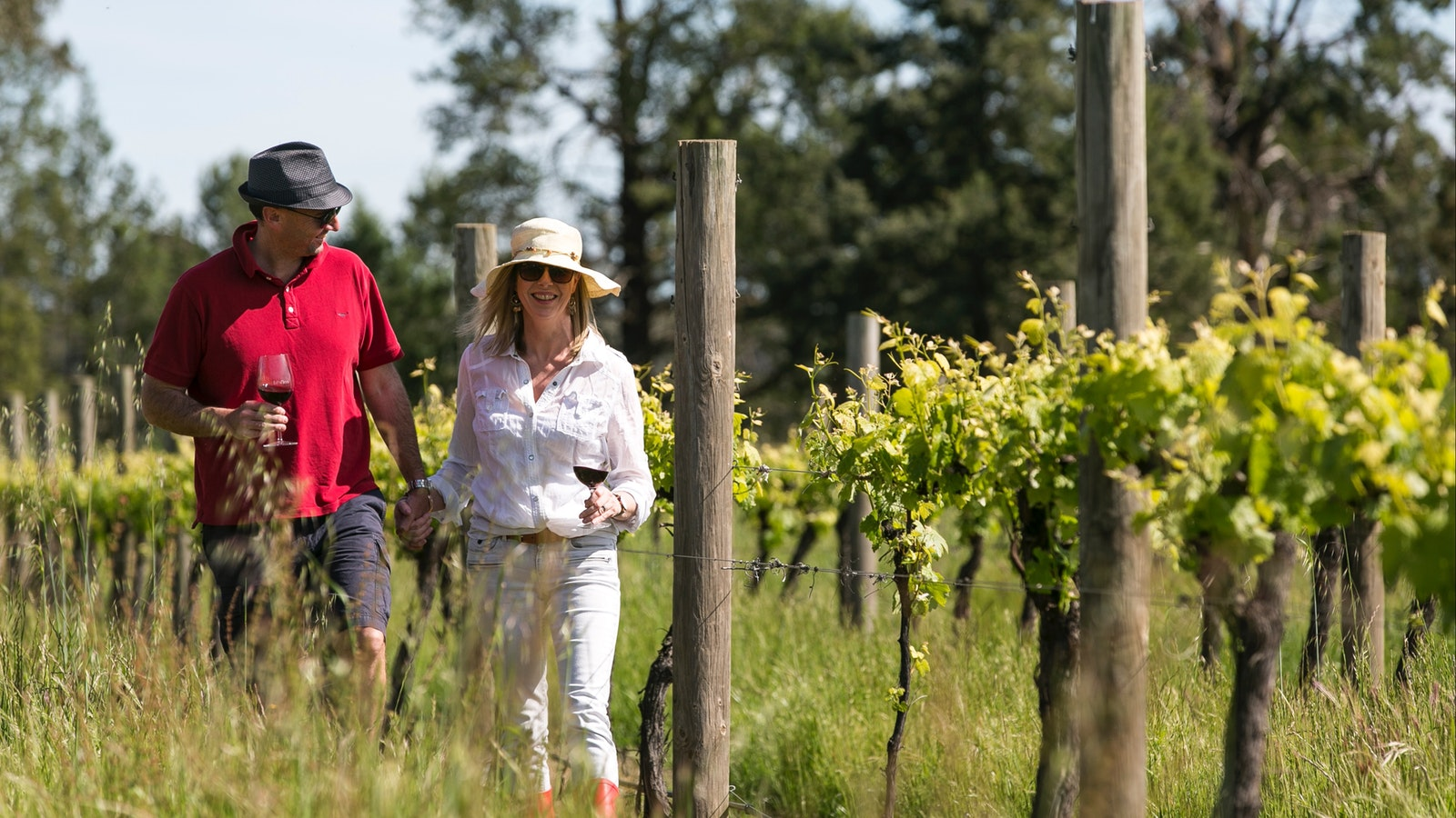 Walking through the vineyard