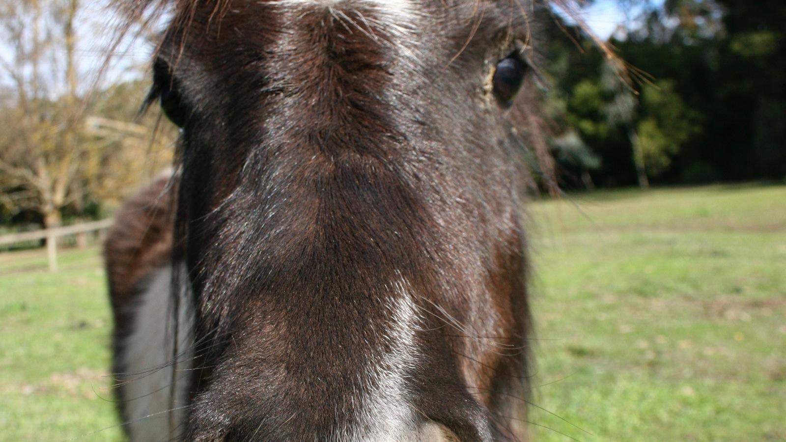 Adorable ponies