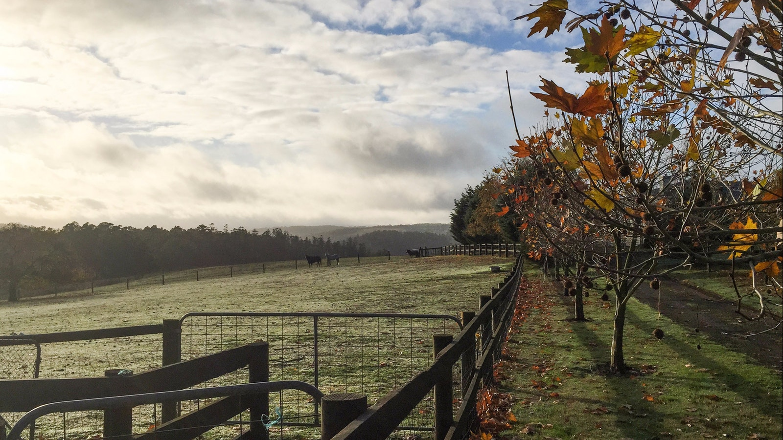 View of paddocks and autumn leaves on trees