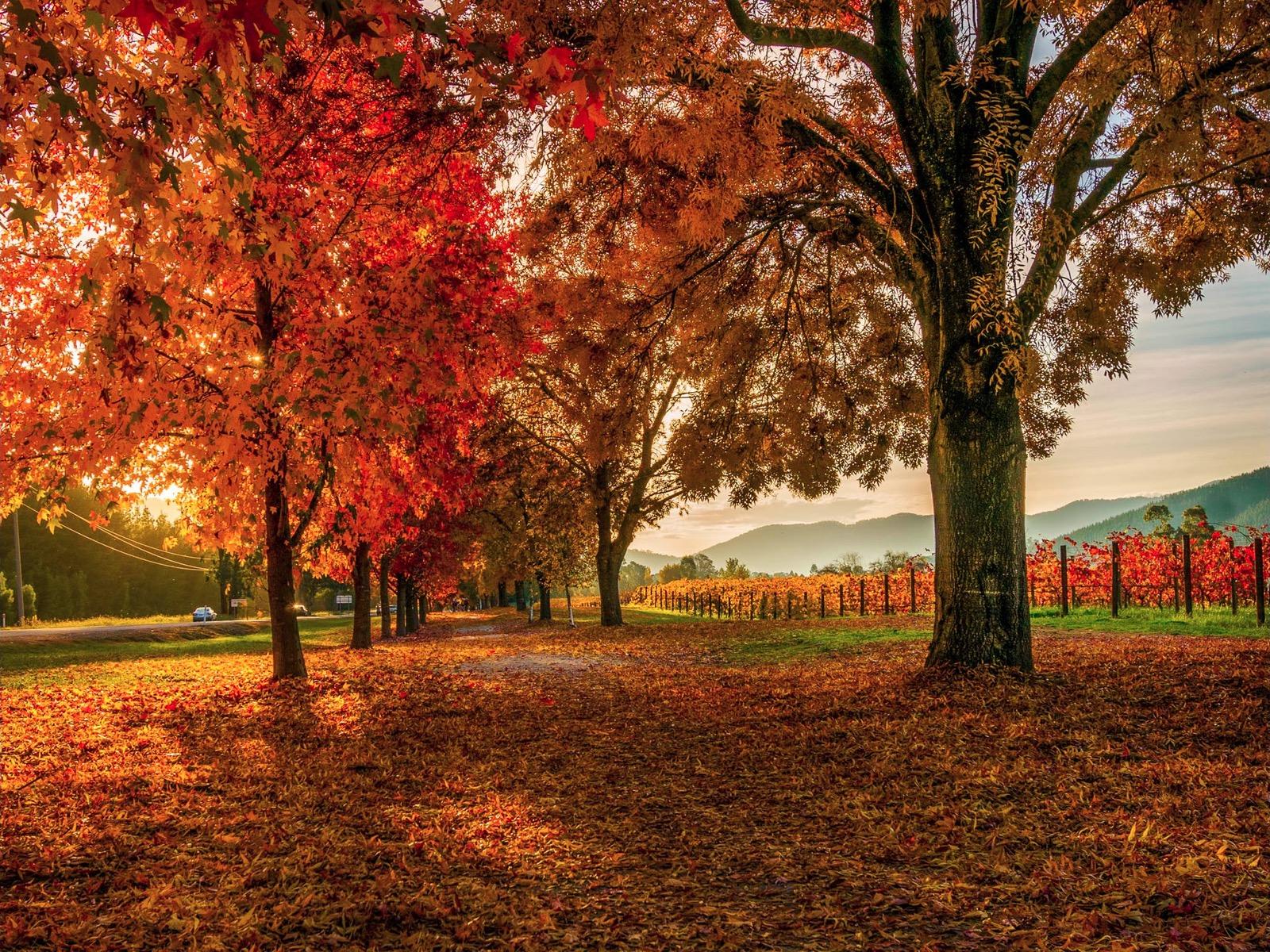 Autumn Colours along the Rail Trail