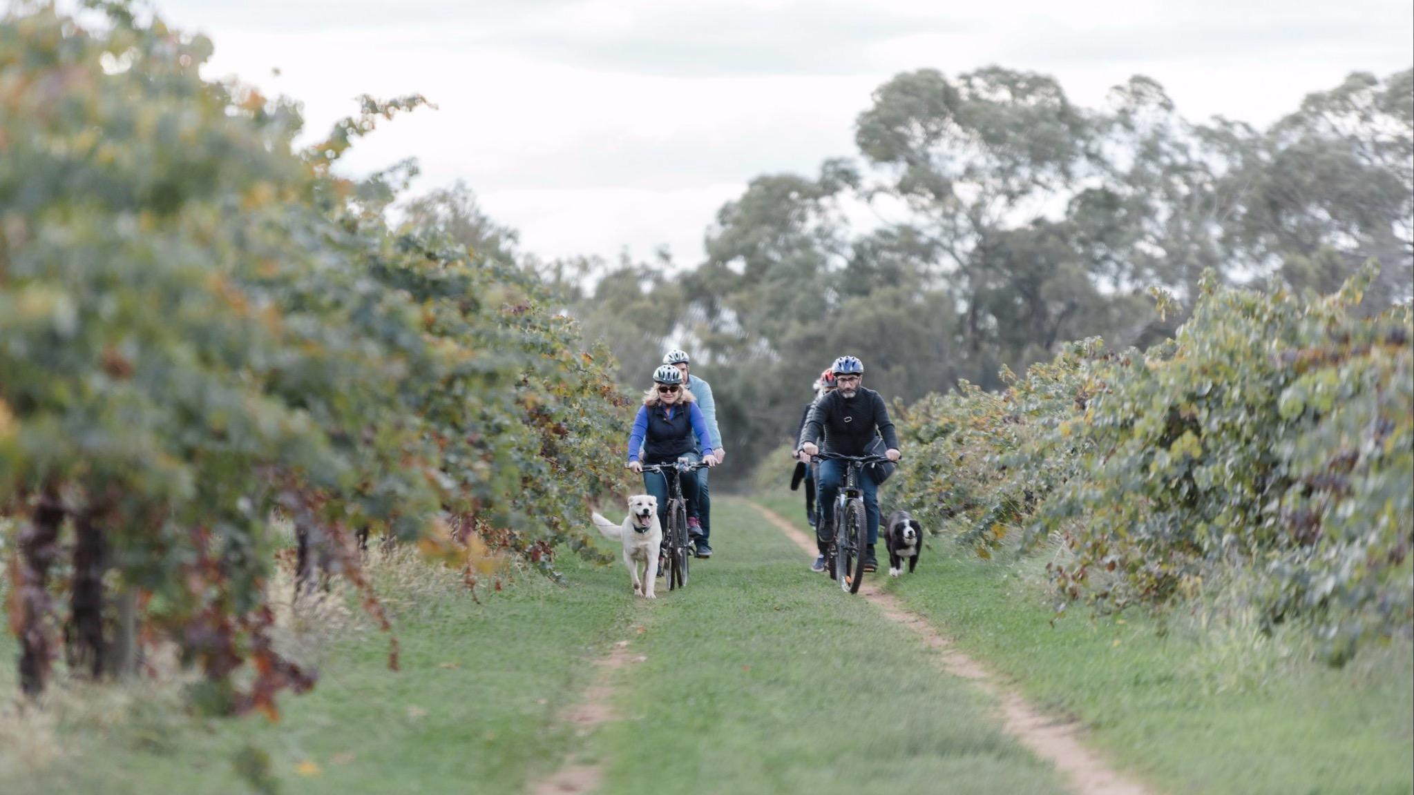 Lake Moodemere Vineyards cycling
