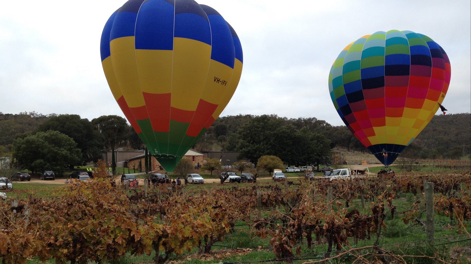 Hot air balloons at Taminick Cellars