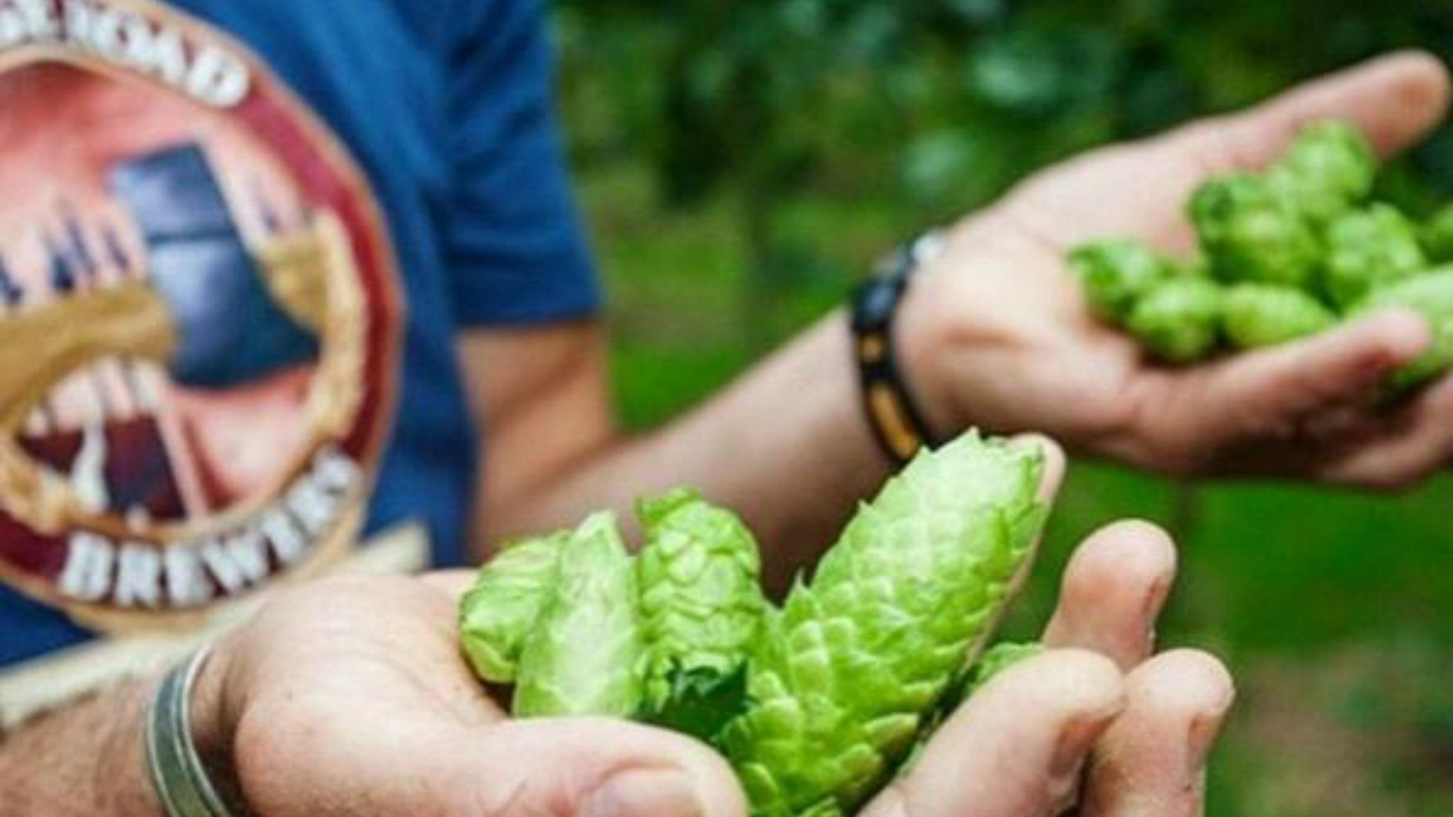 High Country Hops Festival