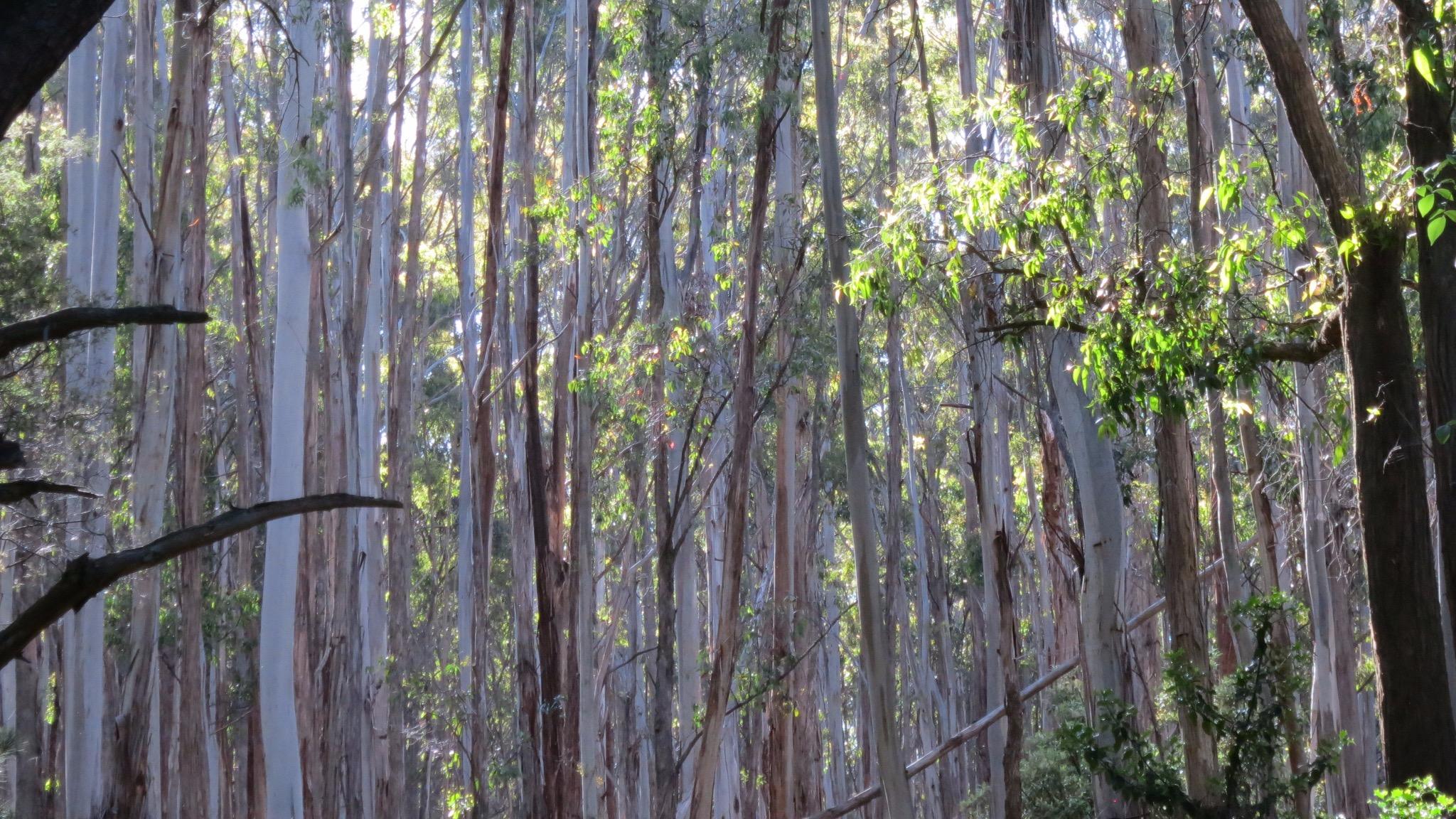 Gum Trees Wandiligong One Day Retreat