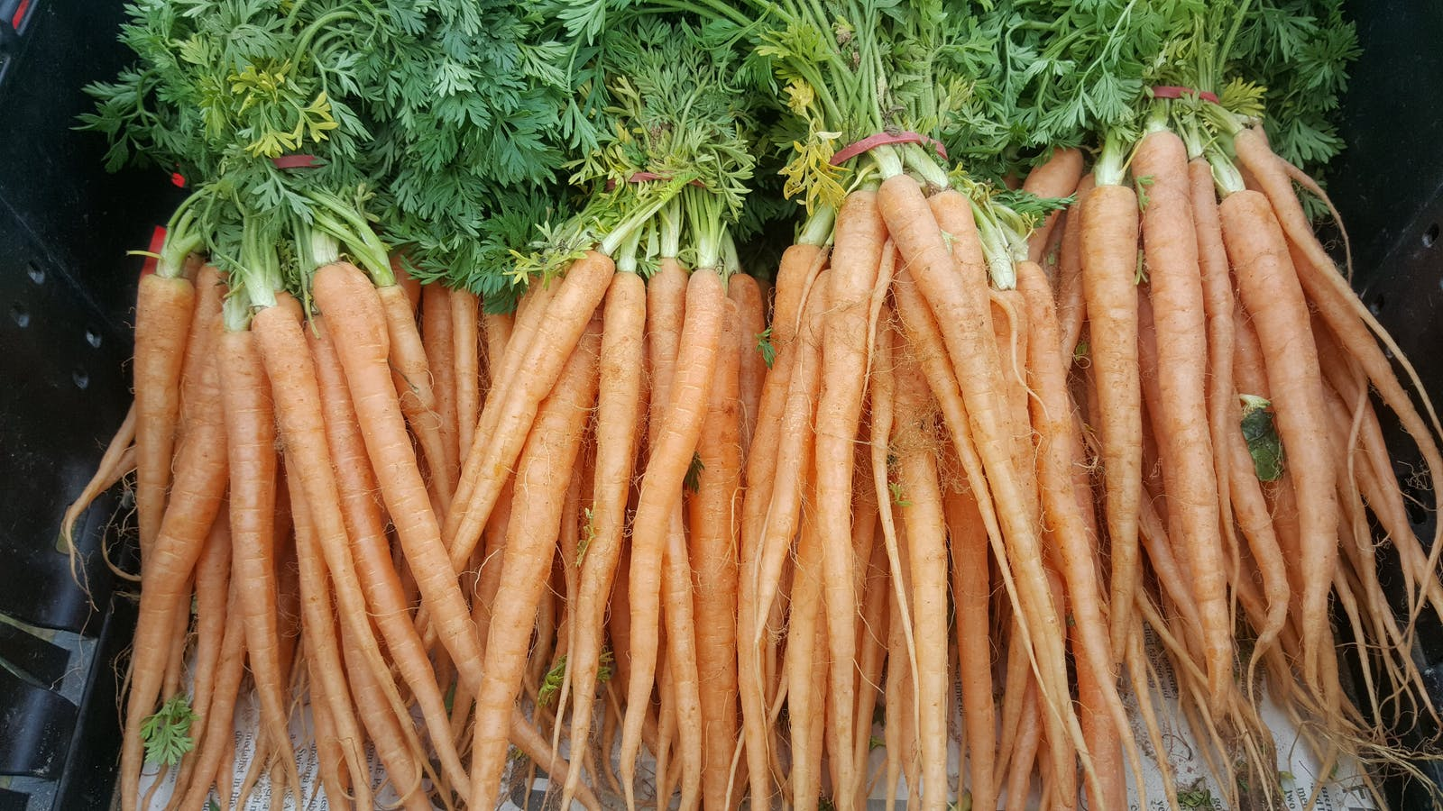 Delicious carrots at the Mansfield Farmers Market