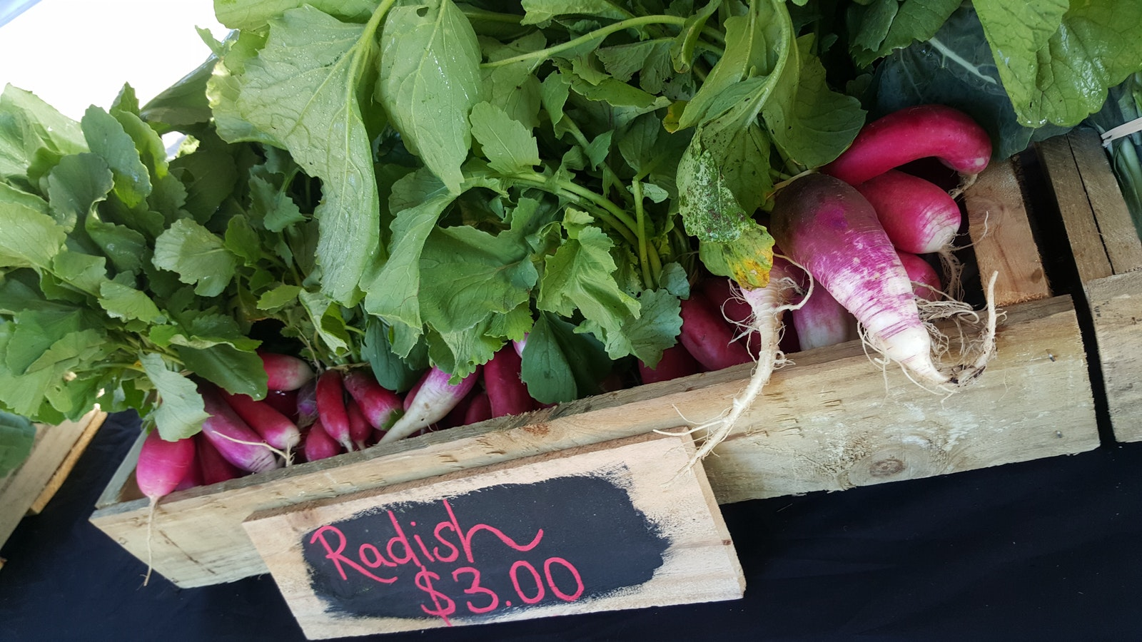fresh radishes at the Mansfield Farmers market