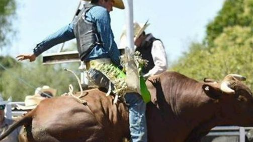 chiltern pro rodeo
