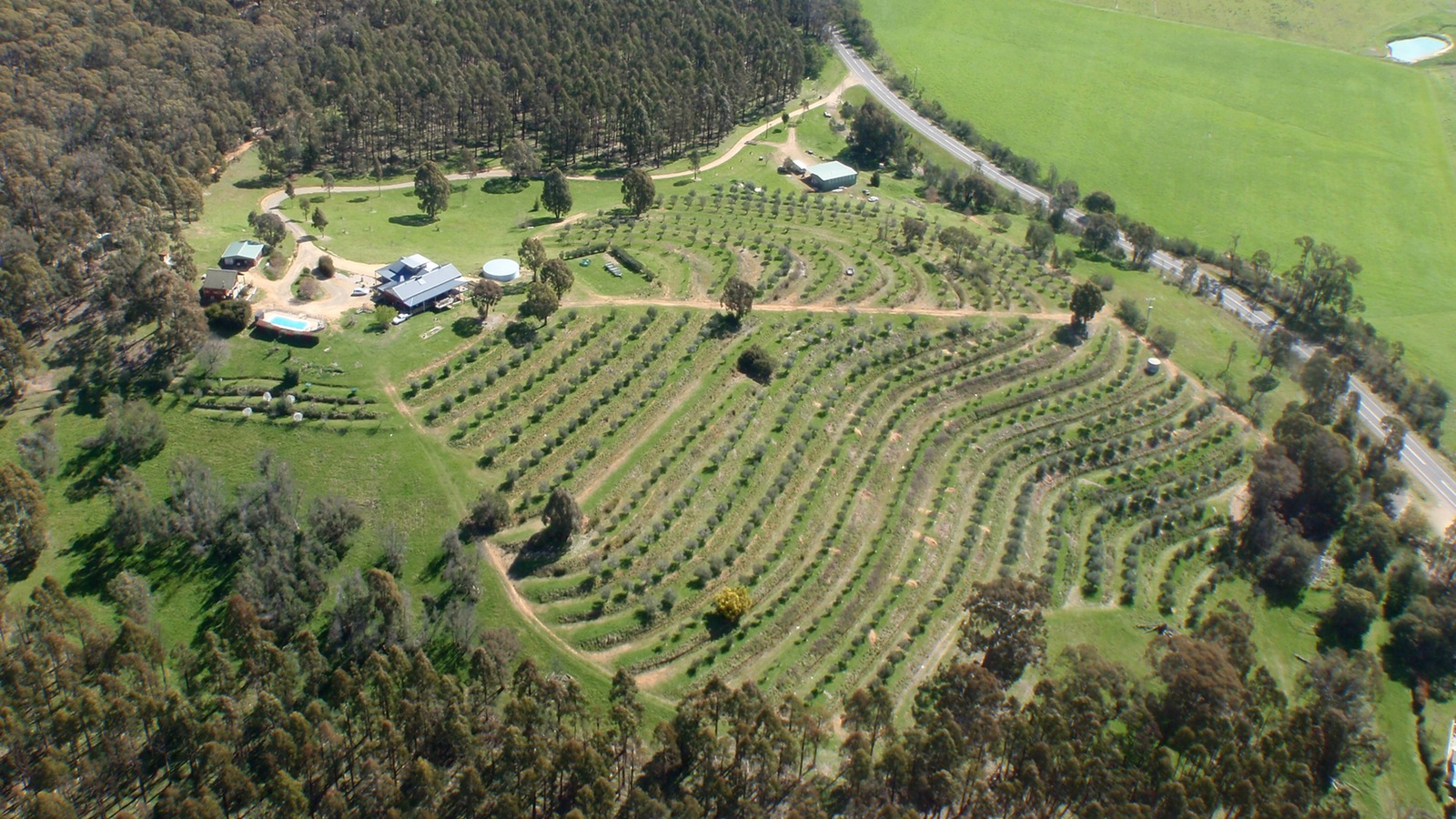 The olive grove at Mt Buffalo Olives