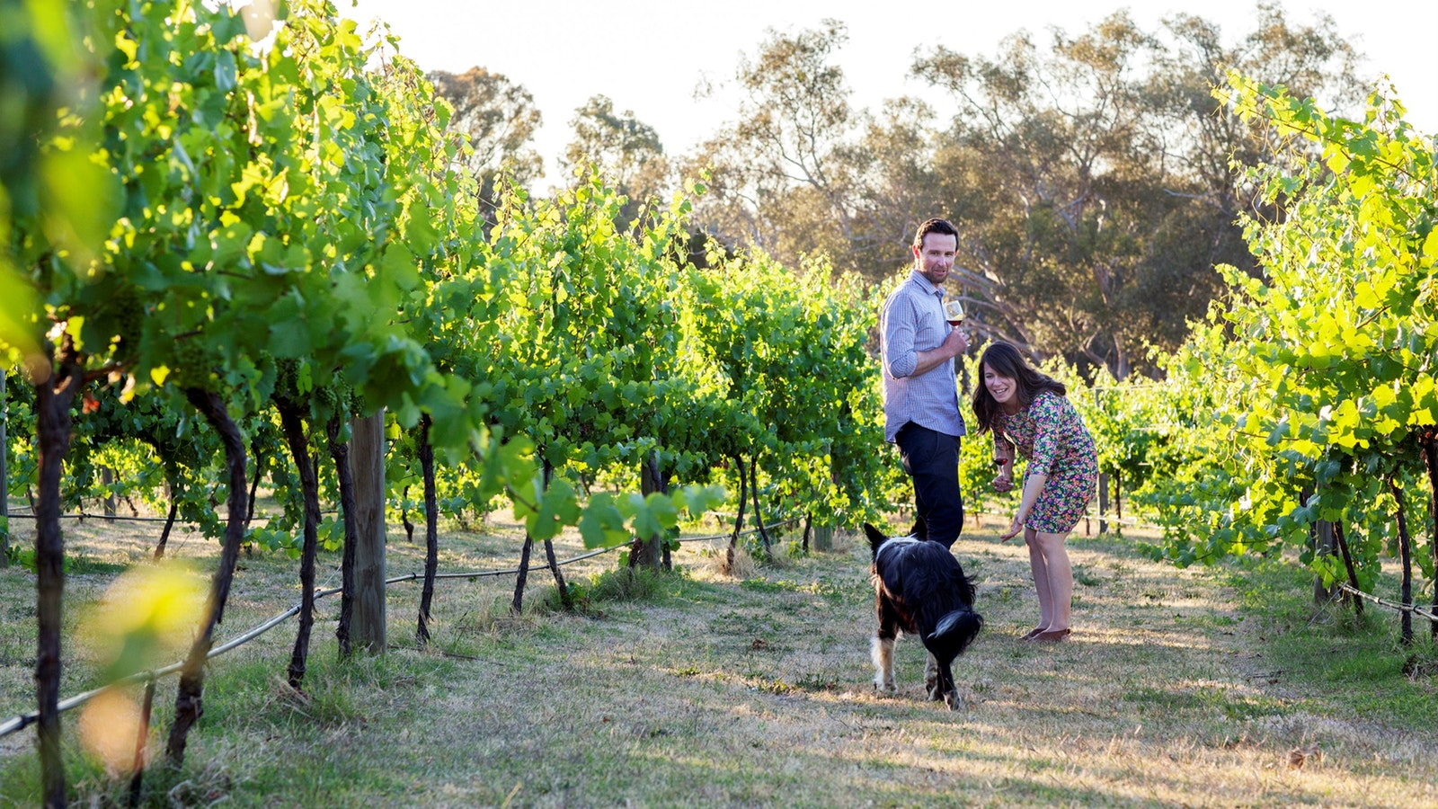 Luke Lou and dog in the vines