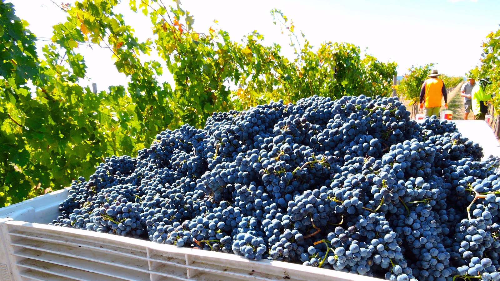 Beechworth Wine Estates