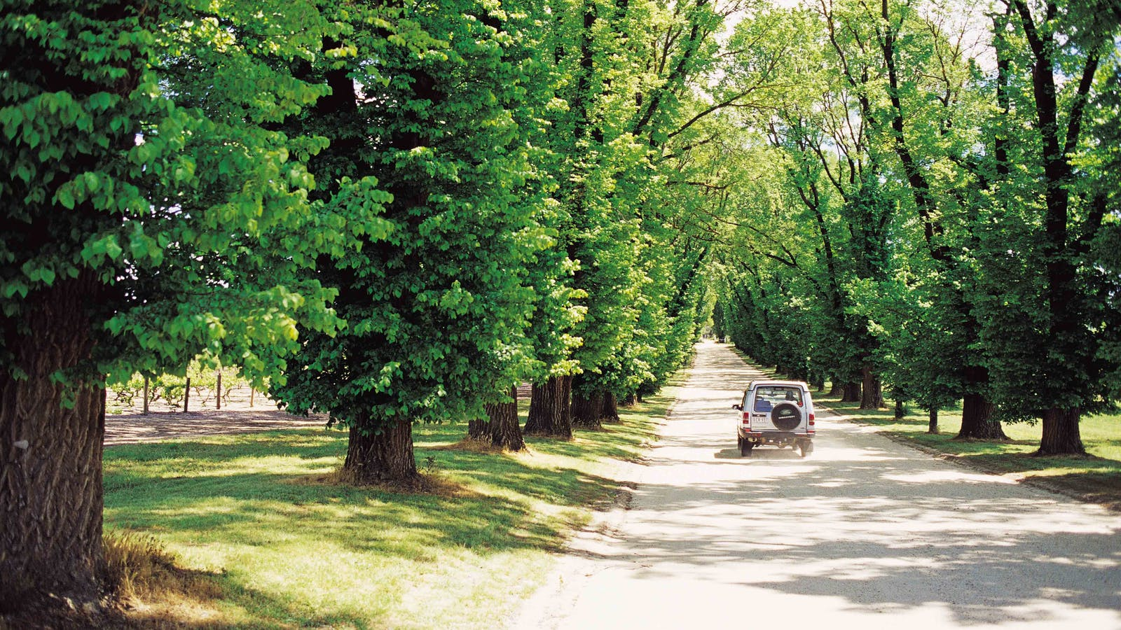 Elm Tree driveway at All Saints Estate