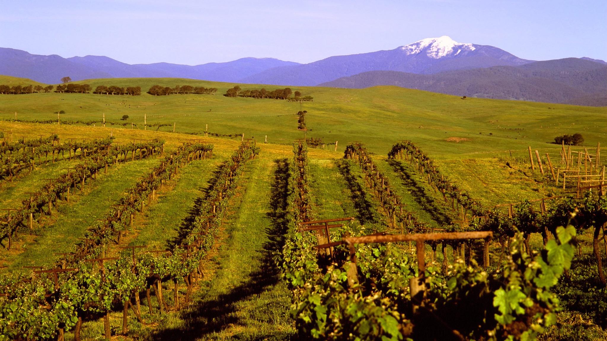 Mt Buller view from vineyard