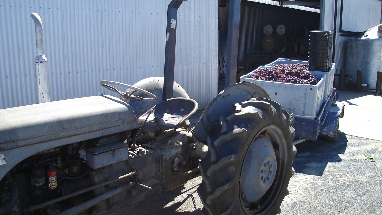 our old grey fergi with a load of handpicked grapes