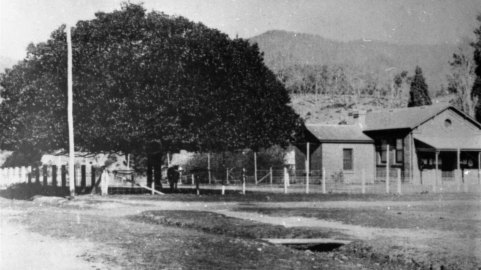 Old Courthouse with chestnut tree