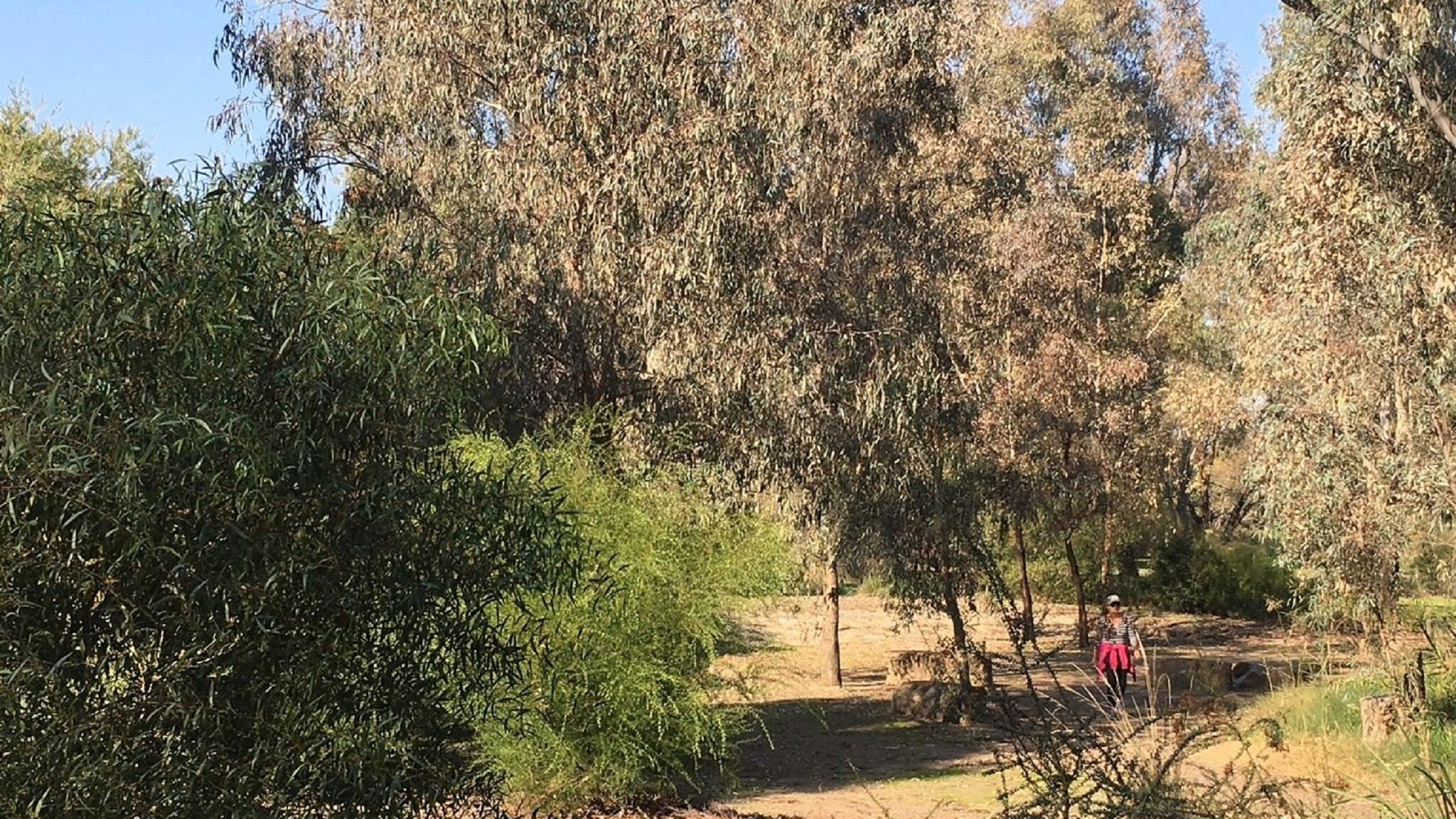 Benalla\'s Aboriginal Garden, Attraction, High Country, Victoria ...