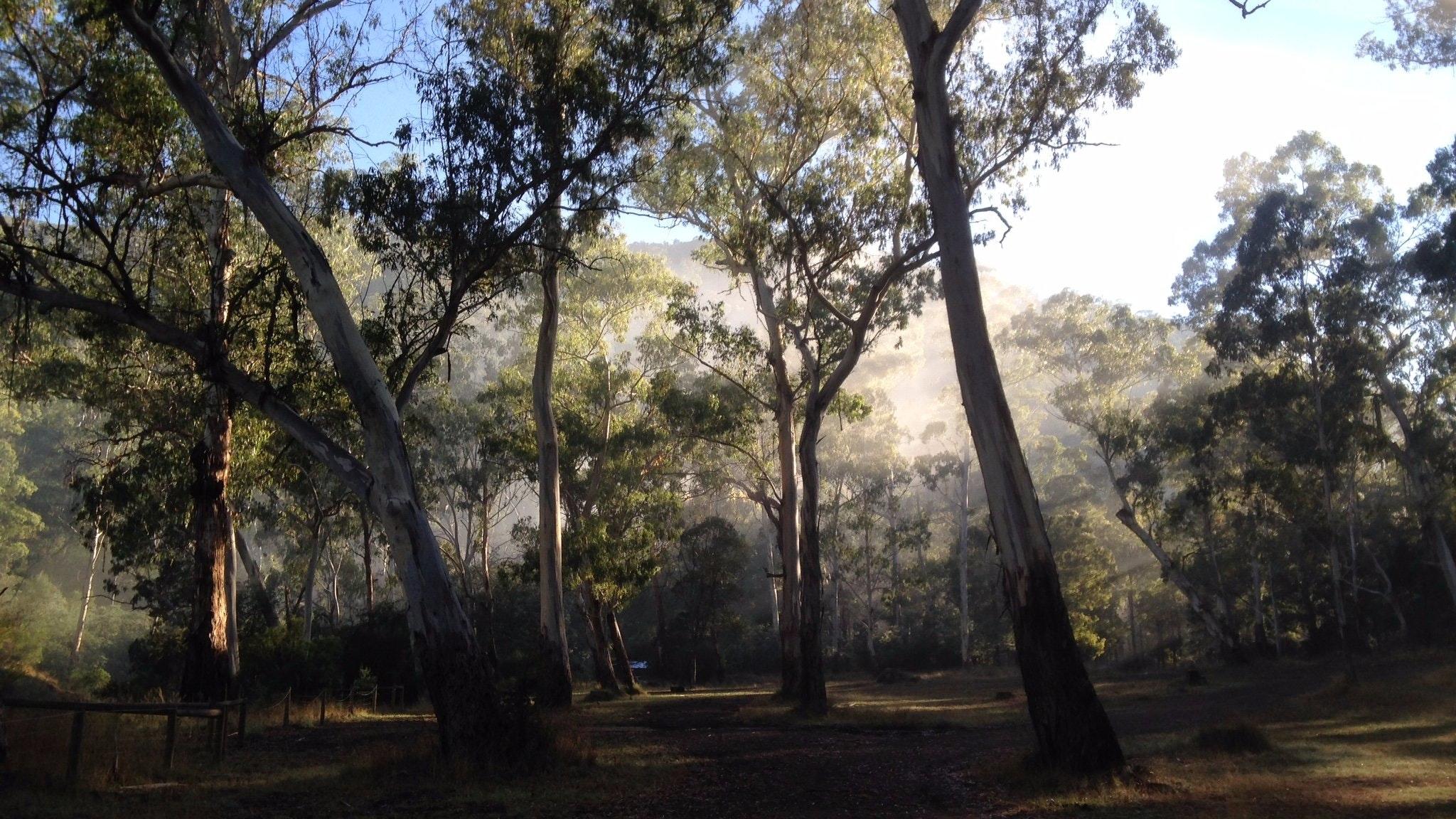 Running Creek Camping Area