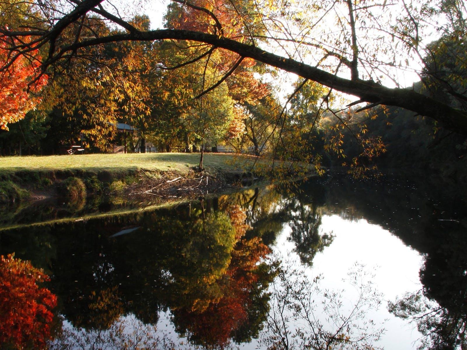 Trees along the riverbank