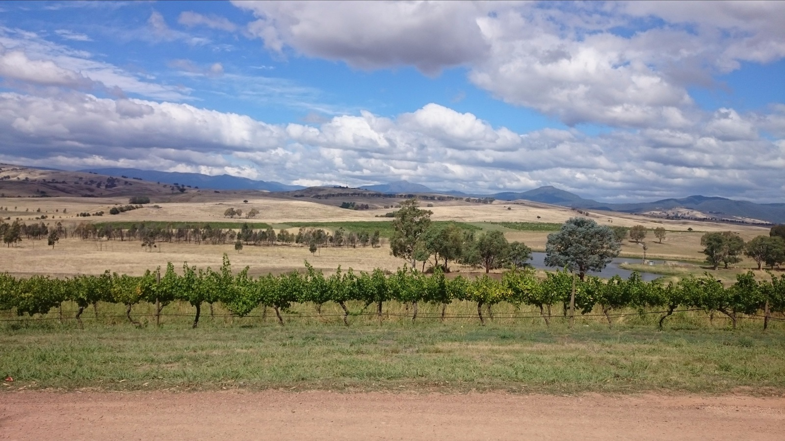 View from Delatite Winery