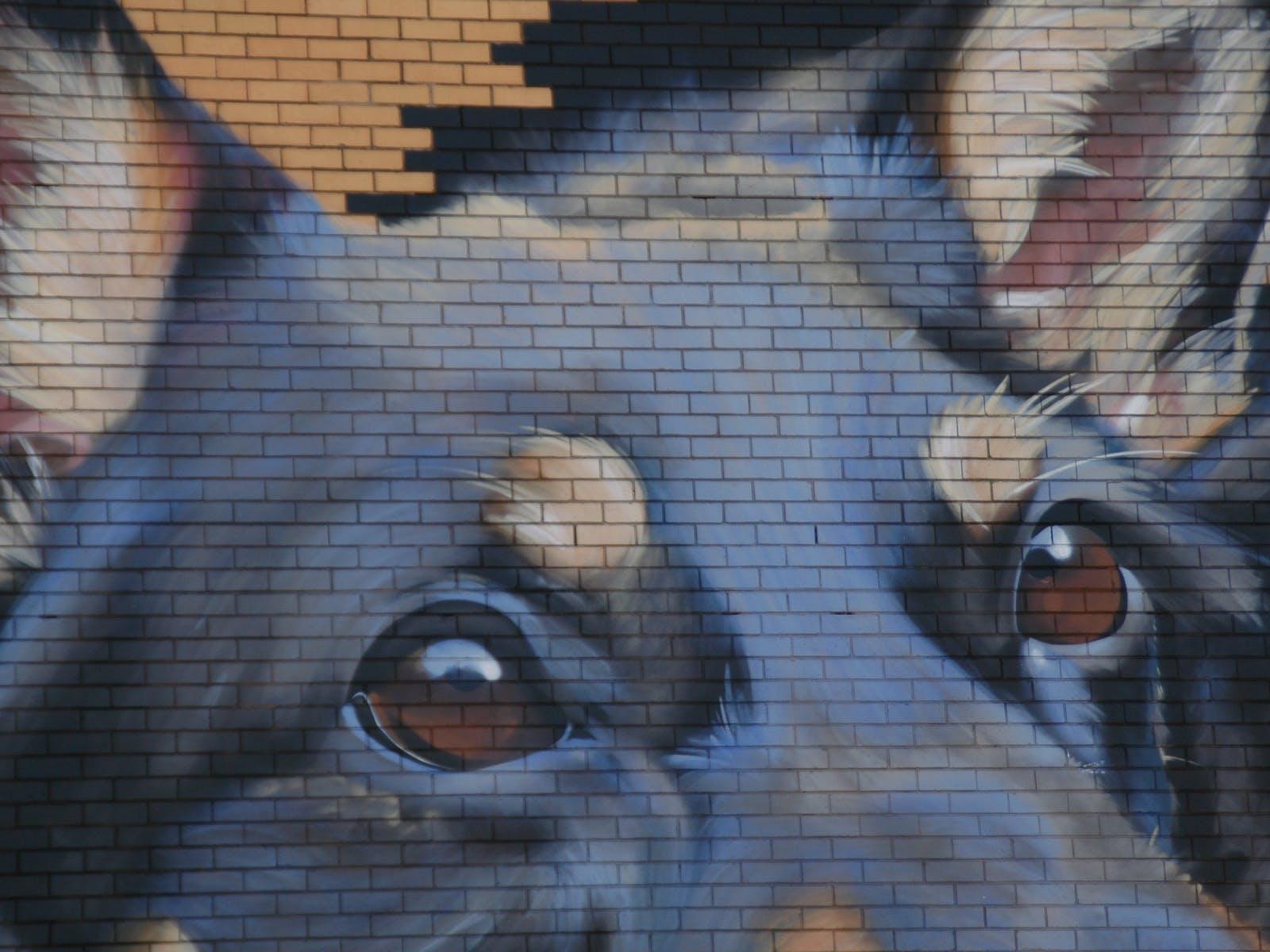 Kelpie wall
