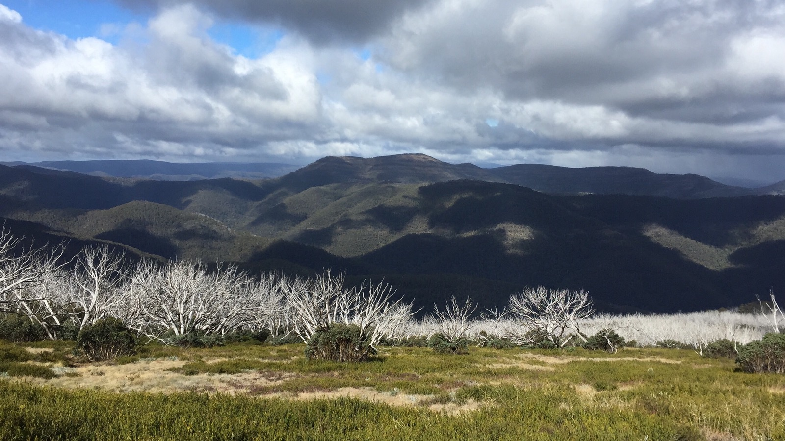 Looking out over burnt trees at Mt McDonald from the top of The Bluff